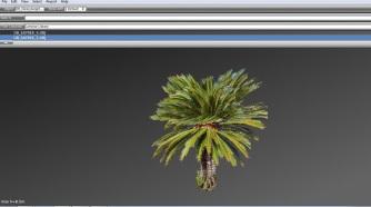 cica palm